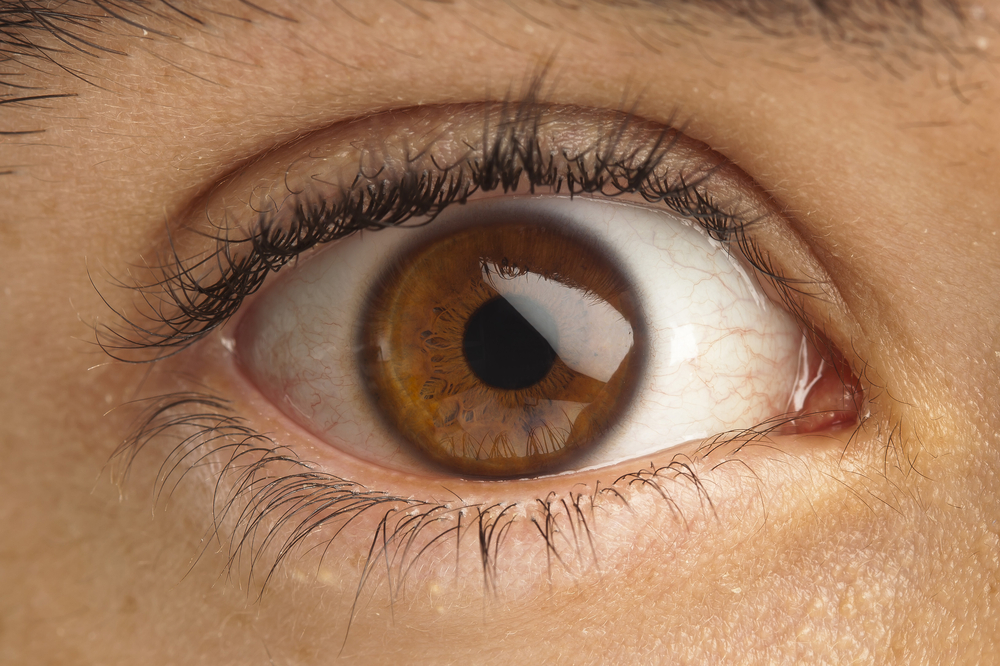 This image has an empty alt attribute; its file name is brown-eye.jpg